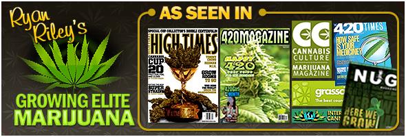 Best Growing Marijuana Book