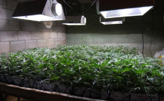 indoor weed