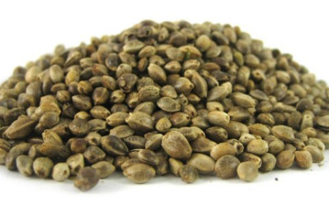 cannabis seeds raw