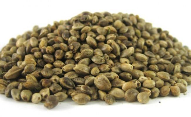 cannabis seeds raw